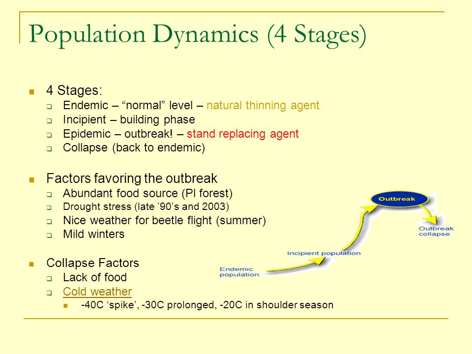 Population Dynamics (4 Stages) 4 Stages:  Endemic – normal level – natural thinning agent  Incipient – building phase  Epidemic – outbreak.