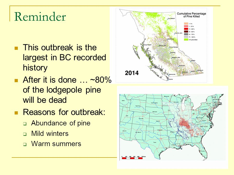 Reminder This outbreak is the largest in BC recorded history After it is done … ~80% of the lodgepole pine will be dead Reasons for outbreak:  Abundance of pine  Mild winters  Warm summers