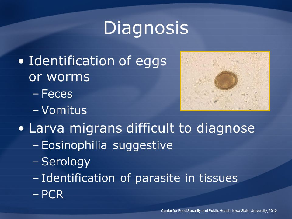 Diagnosis Identification of eggs or worms –Feces –Vomitus Larva migrans difficult to diagnose –Eosinophilia suggestive –Serology –Identification of parasite in tissues –PCR Center for Food Security and Public Health, Iowa State University, 2012