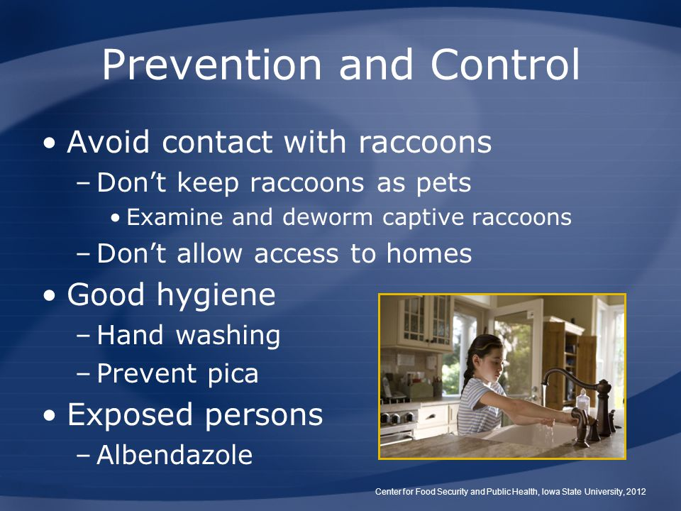 Prevention and Control Avoid contact with raccoons –Don't keep raccoons as pets Examine and deworm captive raccoons –Don't allow access to homes Good hygiene –Hand washing –Prevent pica Exposed persons –Albendazole Center for Food Security and Public Health, Iowa State University, 2012
