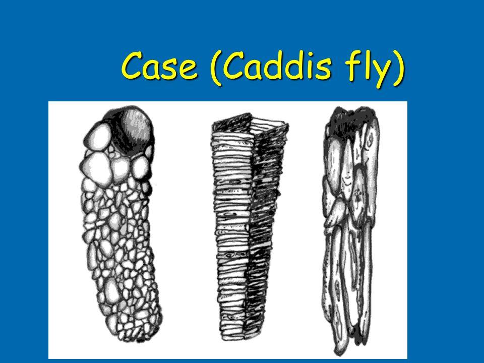 Case (Caddis fly)
