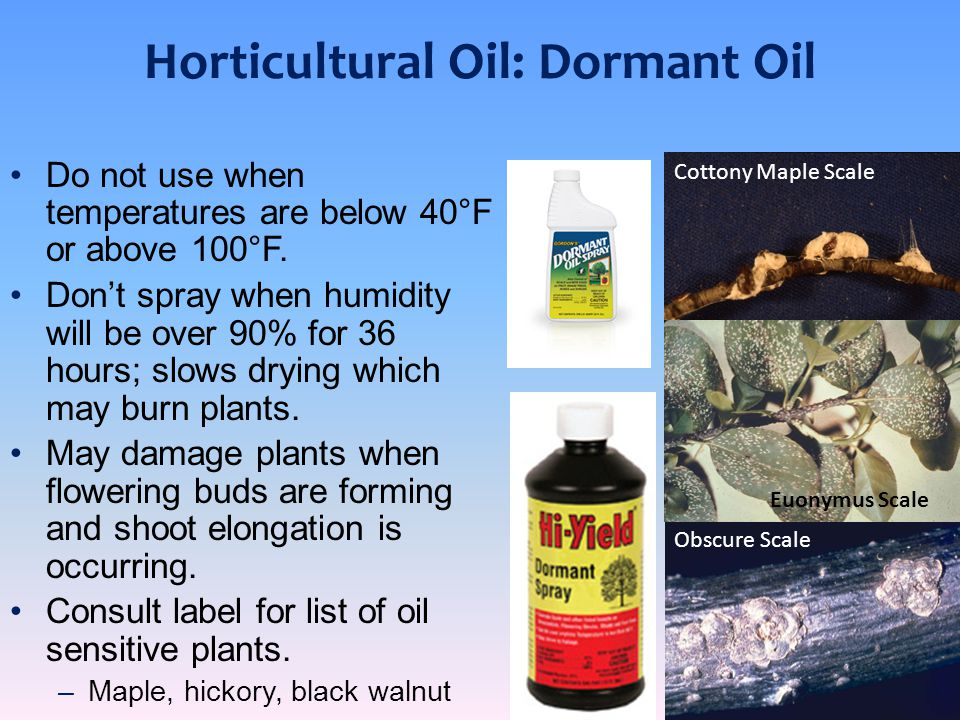 Horticultural Oil: Summer Oil Highly refined petroleum oil (mineral oils).
