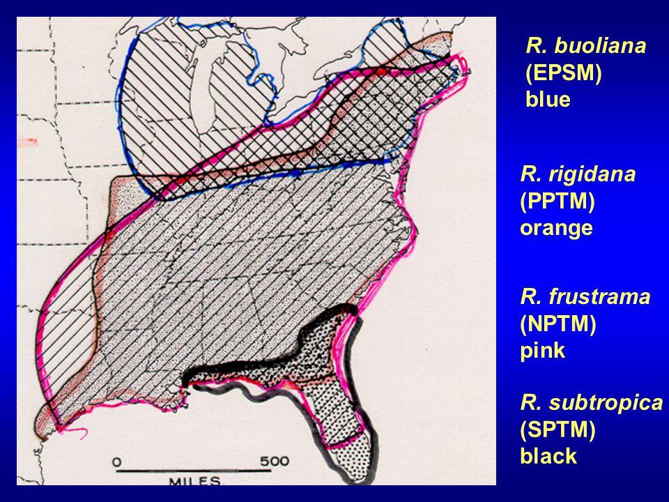 R. subtropica (SPTM) black R. buoliana (EPSM) blue R.