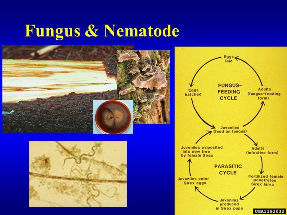 Fungus & Nematode
