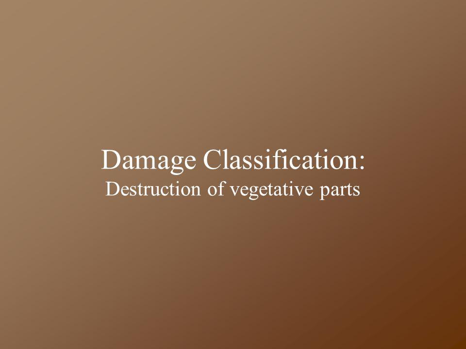 Damage Classification: Destruction of vegetative parts