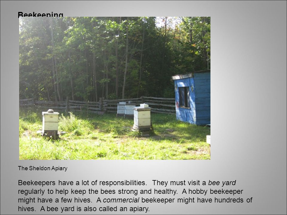 Beekeeping The Sheldon Apiary Beekeepers have a lot of responsibilities.