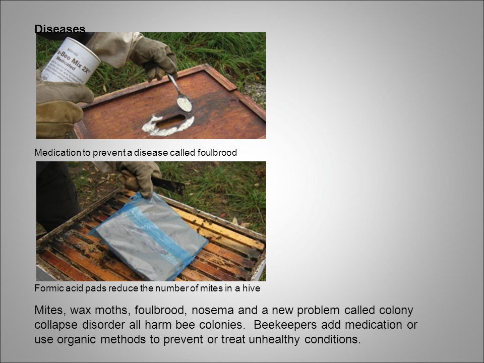 Diseases Medication to prevent a disease called foulbrood Formic acid pads reduce the number of mites in a hive Mites, wax moths, foulbrood, nosema and a new problem called colony collapse disorder all harm bee colonies.