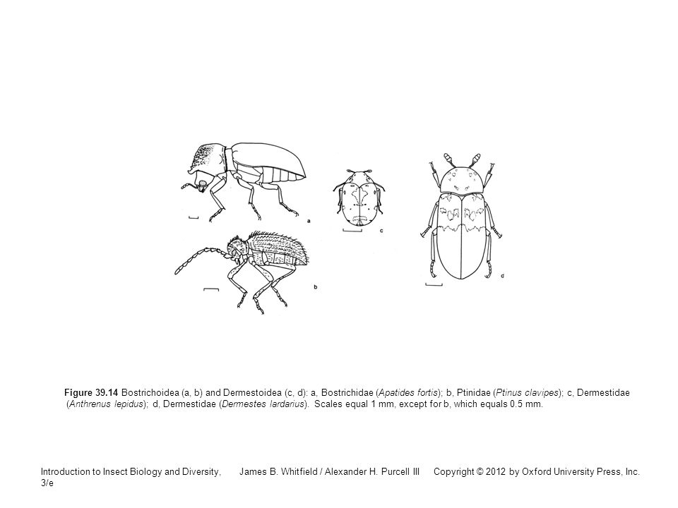 Introduction to Insect Biology and Diversity, 3/e James B. Whitfield / Alexander H. Purcell III Copyright © 2012 by Oxford University Press, Inc. Figu