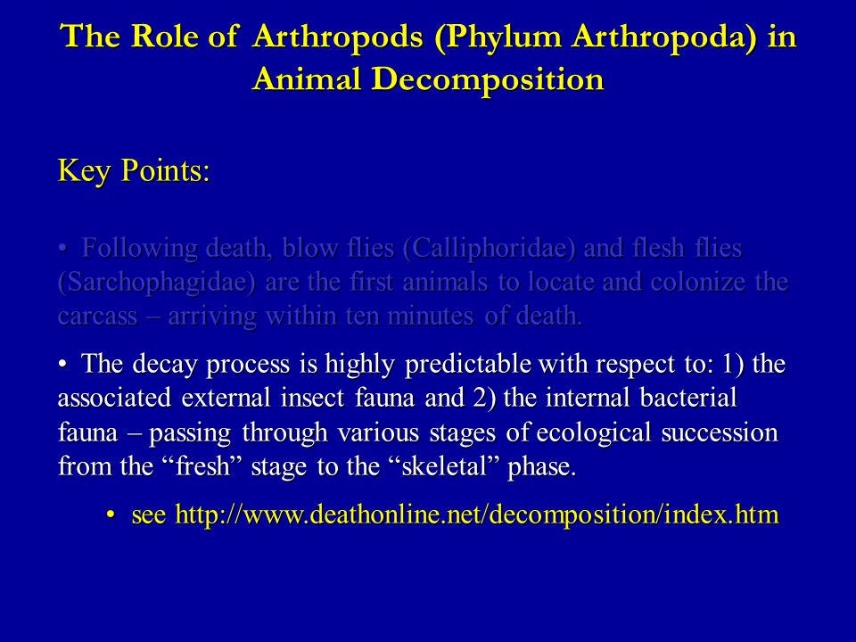 The Role of Arthropods (Phylum Arthropoda) in Animal Decomposition Key Points: Following death, blow flies (Calliphoridae) and flesh flies (Sarchophagidae) are the first animals to locate and colonize the carcass – arriving within ten minutes of death.