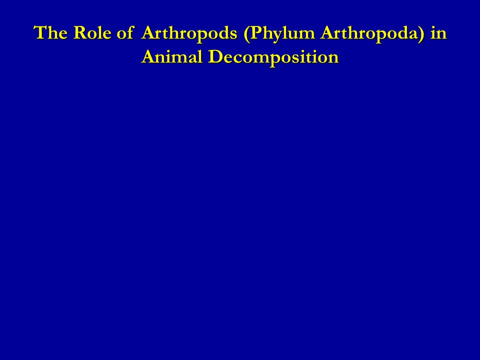 The Role of Arthropods (Phylum Arthropoda) in Animal Decomposition