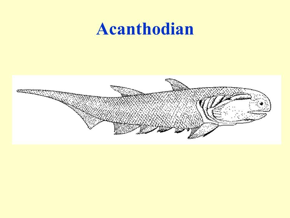 Acanthodian