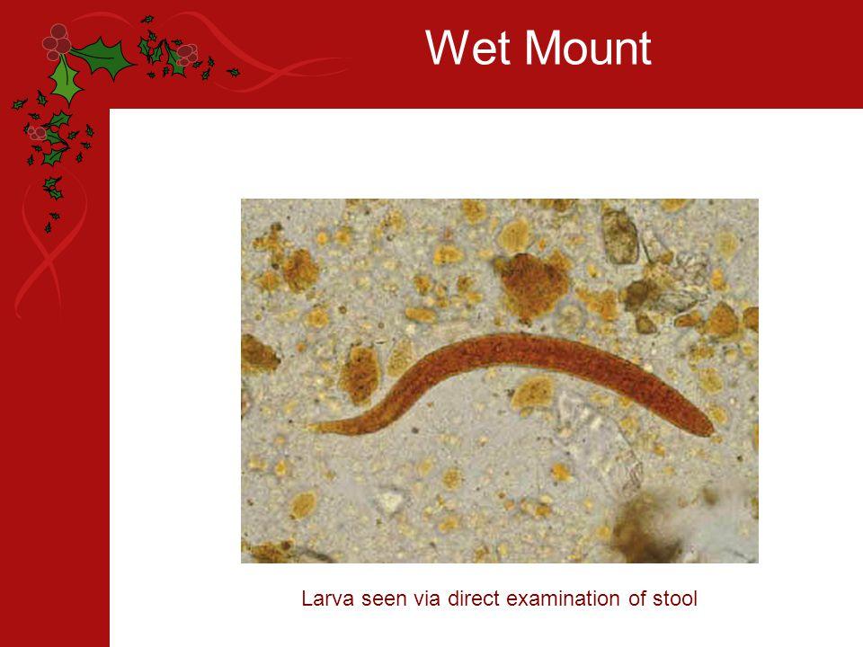 Wet Mount Larva seen via direct examination of stool