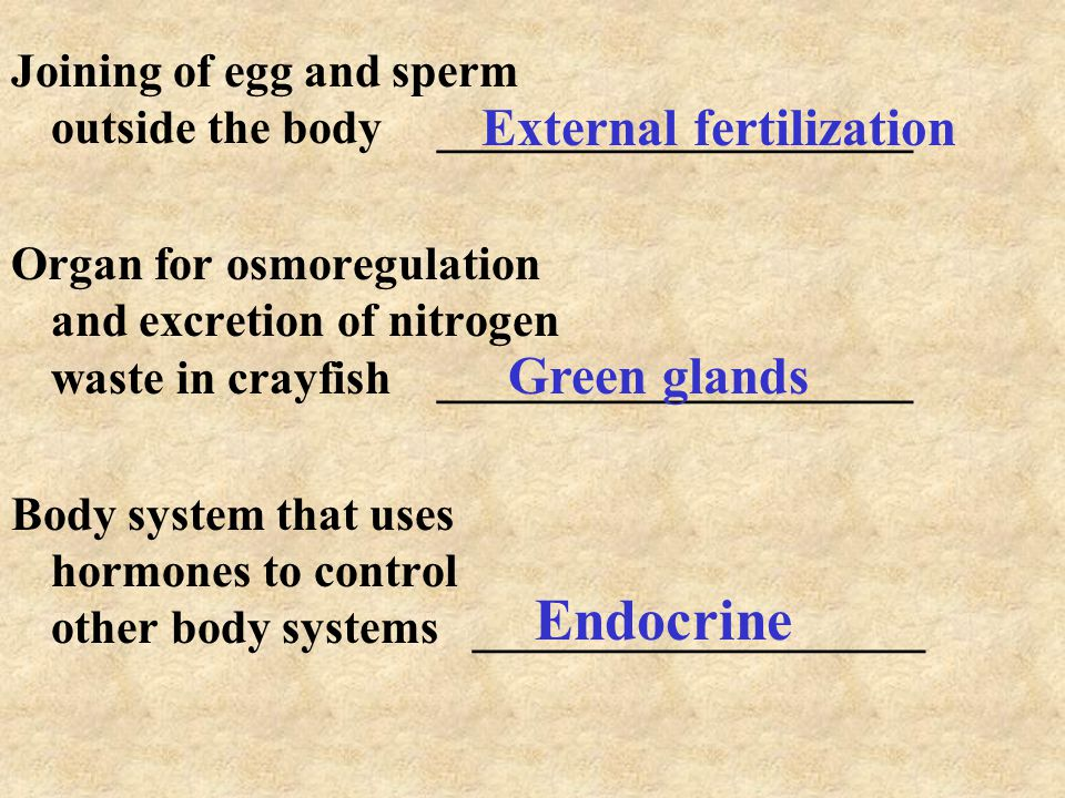 Joining of egg and sperm outside the body____________________ Organ for osmoregulation and excretion of nitrogen waste in crayfish____________________ Body system that uses hormones to control other body systems ___________________ External fertilization Green glands Endocrine