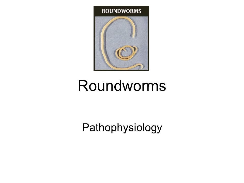 Roundworms Pathophysiology