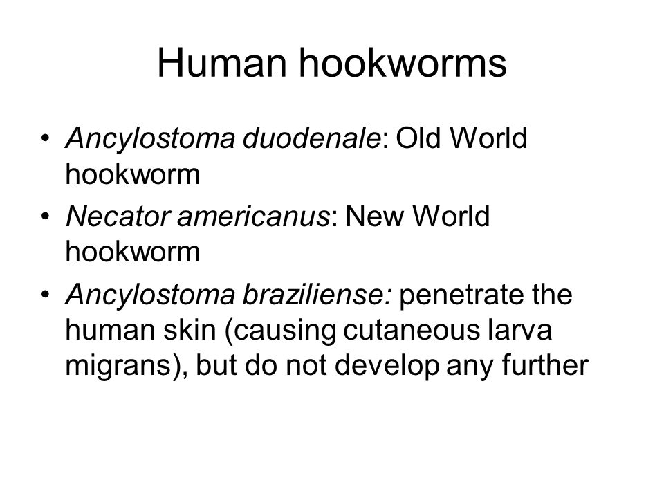 Human hookworms Ancylostoma duodenale: Old World hookworm Necator americanus: New World hookworm Ancylostoma braziliense: penetrate the human skin (causing cutaneous larva migrans), but do not develop any further