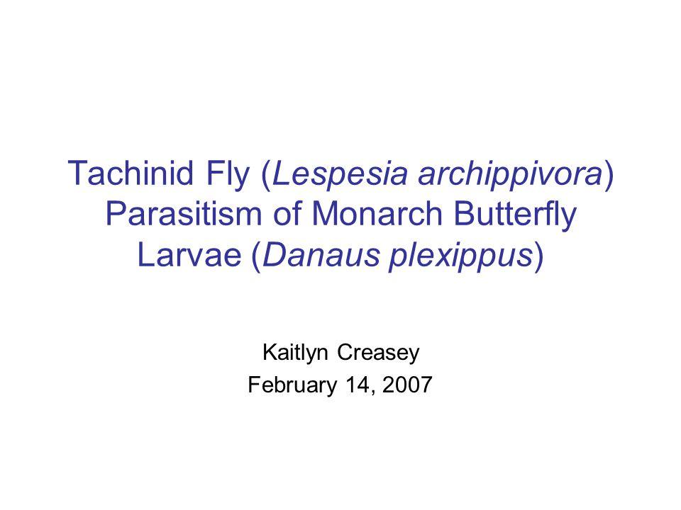 Tachinid Fly (Lespesia archippivora) Parasitism of Monarch Butterfly Larvae (Danaus plexippus) Kaitlyn Creasey February 14, 2007