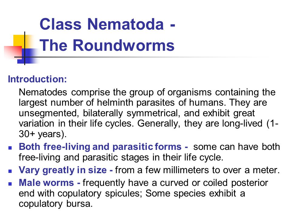 Class Nematoda - The Roundworms Trichinella spiralis – trichinosis Major pathology and symptoms: Fever, muscle pain, bilateral periorbital edema, and increased eosinophil count Intestinal phase – small intestine edema and inflammation, nausea, vomiting, abdominal pain, diarrhea, headache, and fever.