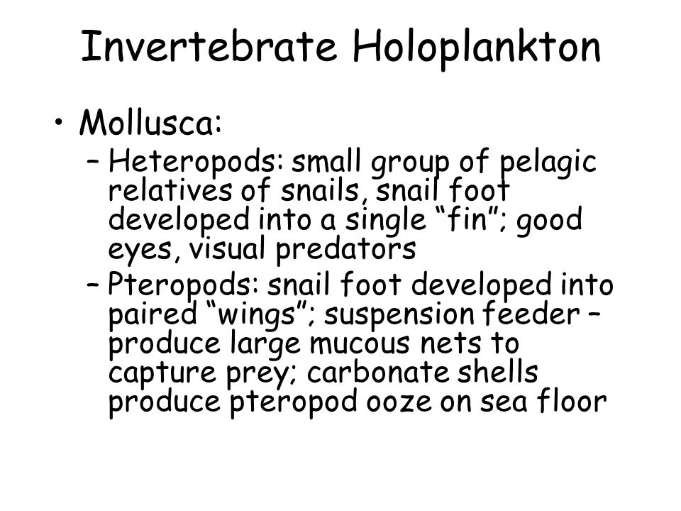 Invertebrate Holoplankton Mollusca: –Heteropods: small group of pelagic relatives of snails, snail foot developed into a single fin ; good eyes, visual predators –Pteropods: snail foot developed into paired wings ; suspension feeder – produce large mucous nets to capture prey; carbonate shells produce pteropod ooze on sea floor