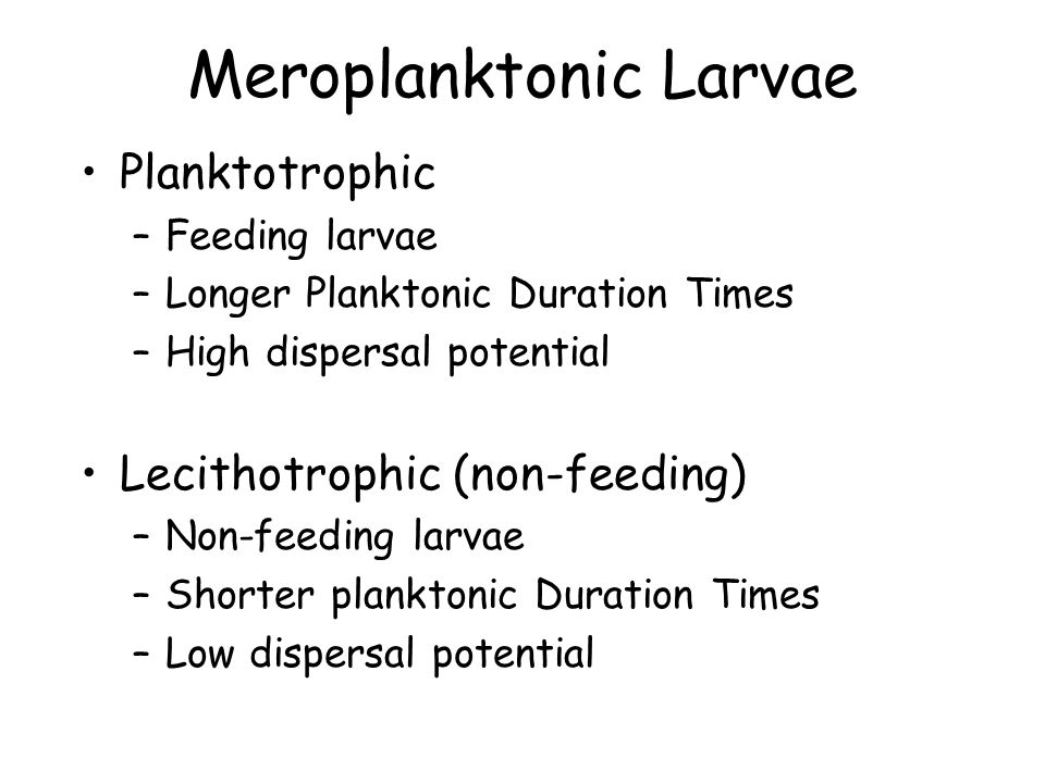 Meroplanktonic Larvae Planktotrophic –Feeding larvae –Longer Planktonic Duration Times –High dispersal potential Lecithotrophic (non-feeding) –Non-feeding larvae –Shorter planktonic Duration Times –Low dispersal potential
