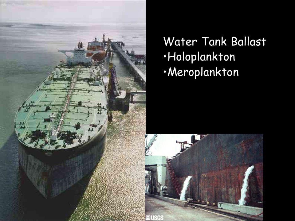 Water Tank Ballast Holoplankton Meroplankton