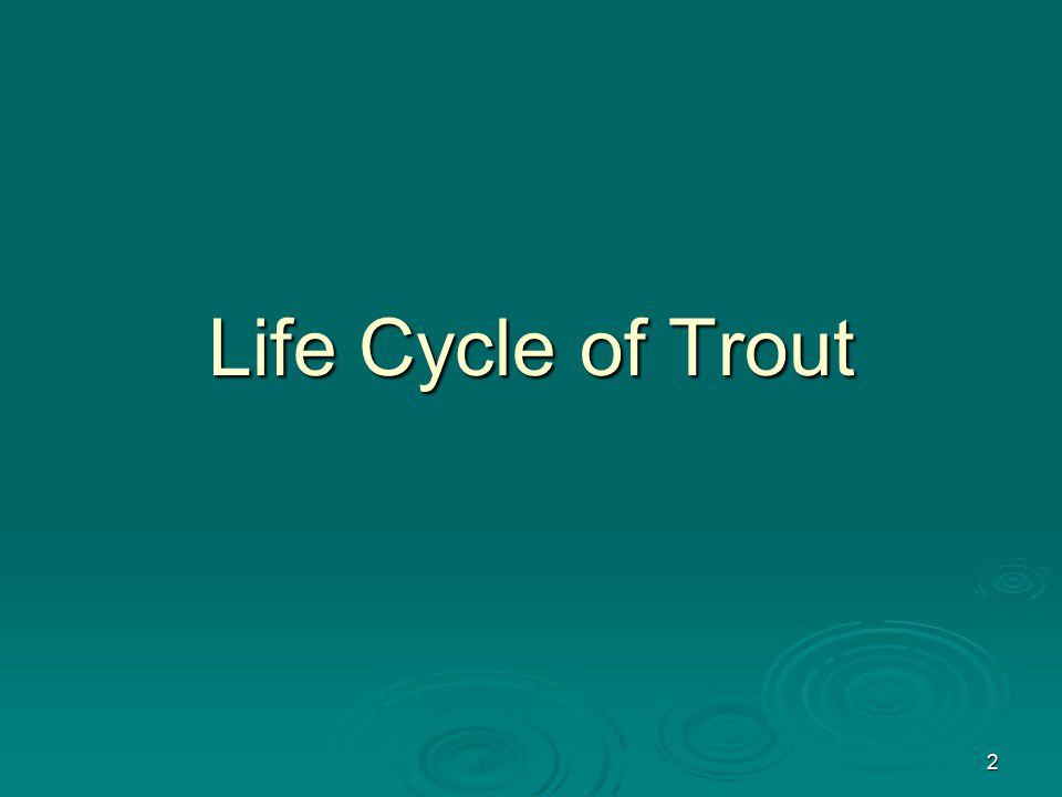 2 Life Cycle of Trout