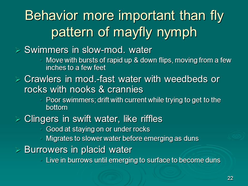 22 Behavior more important than fly pattern of mayfly nymph  Swimmers in slow-mod. water Move with bursts of rapid up & down flips, moving from a few