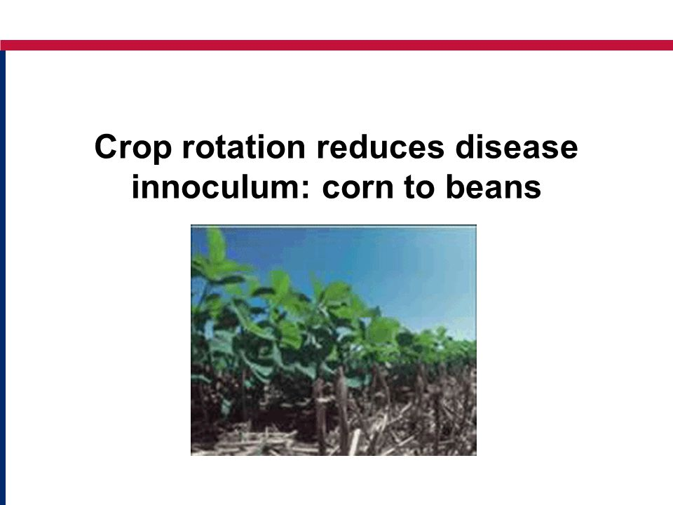Crop rotation reduces disease innoculum: corn to beans