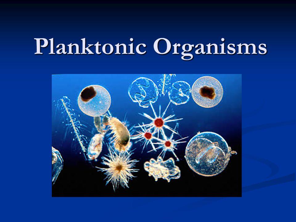 Planktonic Organisms