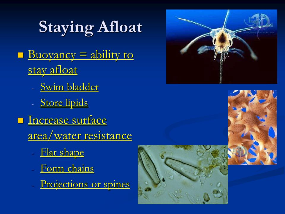 Staying Afloat Buoyancy = ability to stay afloat Buoyancy = ability to stay afloat - Swim bladder - Store lipids Increase surface area/water resistance Increase surface area/water resistance - Flat shape - Form chains - Projections or spines