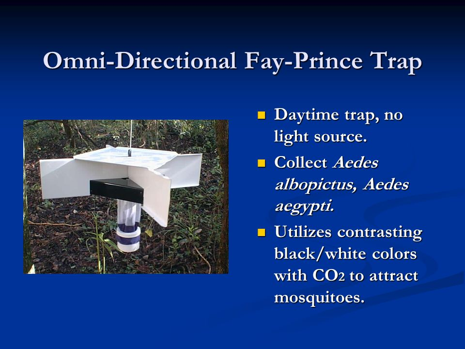 Omni-Directional Fay-Prince Trap Daytime trap, no light source.