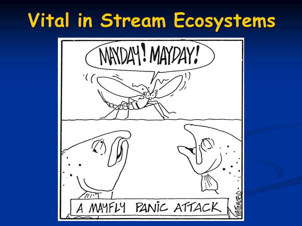 Vital in Stream Ecosystems