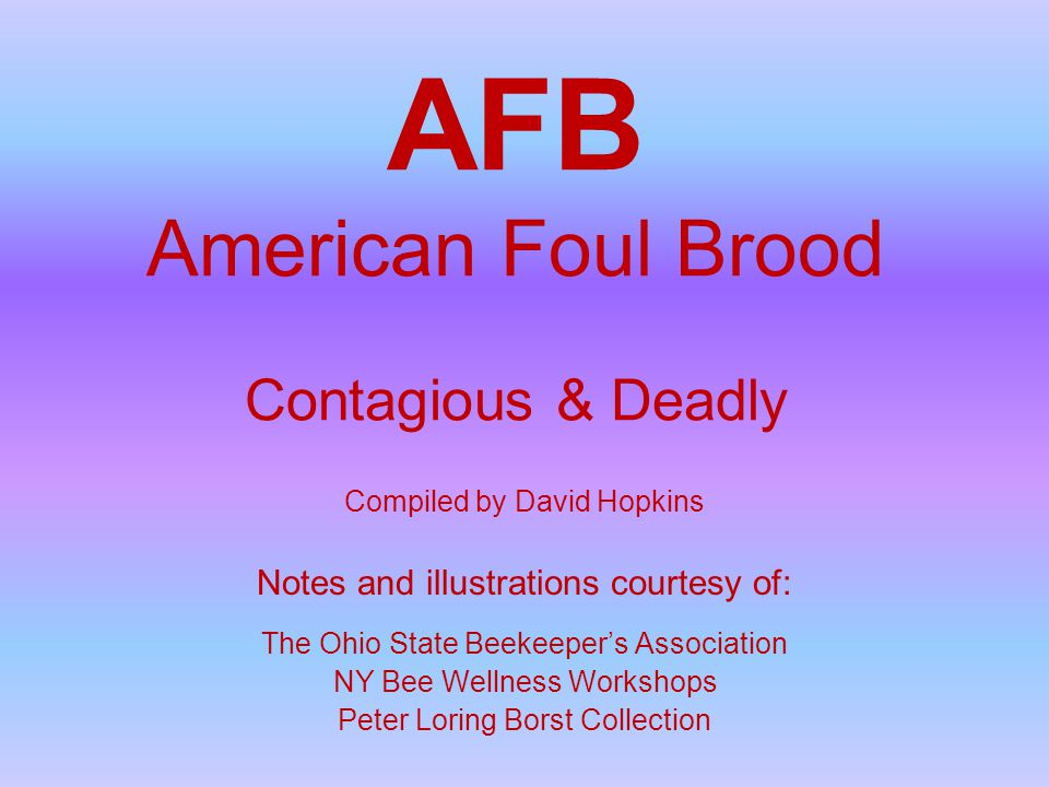 AFB American Foul Brood Contagious & Deadly Compiled by David Hopkins Notes and illustrations courtesy of: The Ohio State Beekeeper's Association NY Bee Wellness Workshops Peter Loring Borst Collection