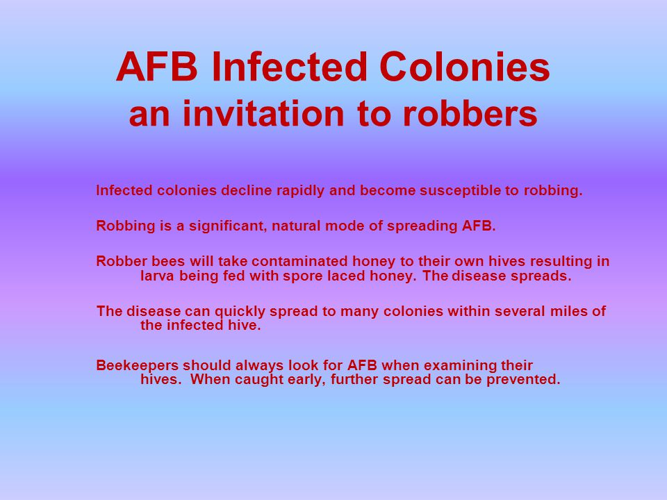 AFB Infected Colonies an invitation to robbers Infected colonies decline rapidly and become susceptible to robbing.