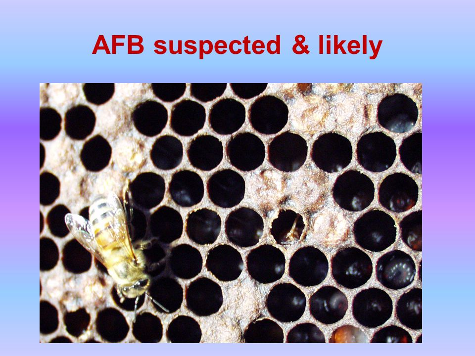 AFB suspected & likely