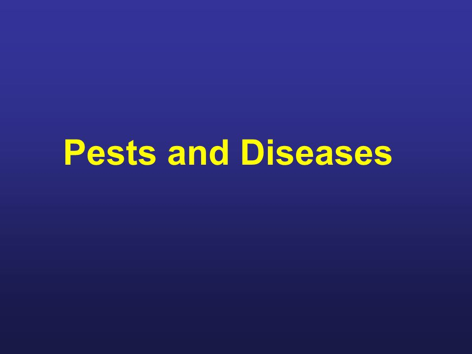 Beekeepers Role: Periodic Colony Inspections Recognize signs of bee diseases and pests Differentiate between serious and not so serious Know the corrective actions for each