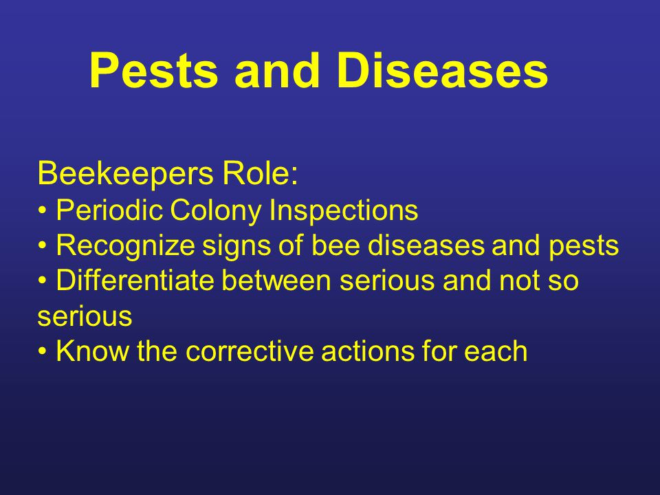 Insect pests in hives Tracheal Mites Still a problem. Introduced in the mid 1880's.