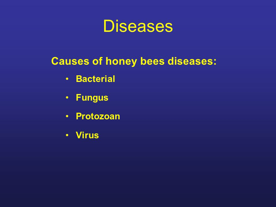 Insect pests in hives Varroa Mite Tracheal Mite Small Hive Beetle Wax moth