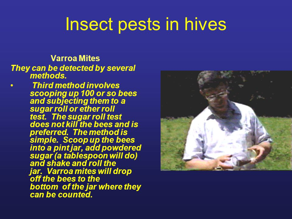 Insect pests in hives Varroa Mites They can be detected by several methods. Third method involves scooping up 100 or so bees and subjecting them to a