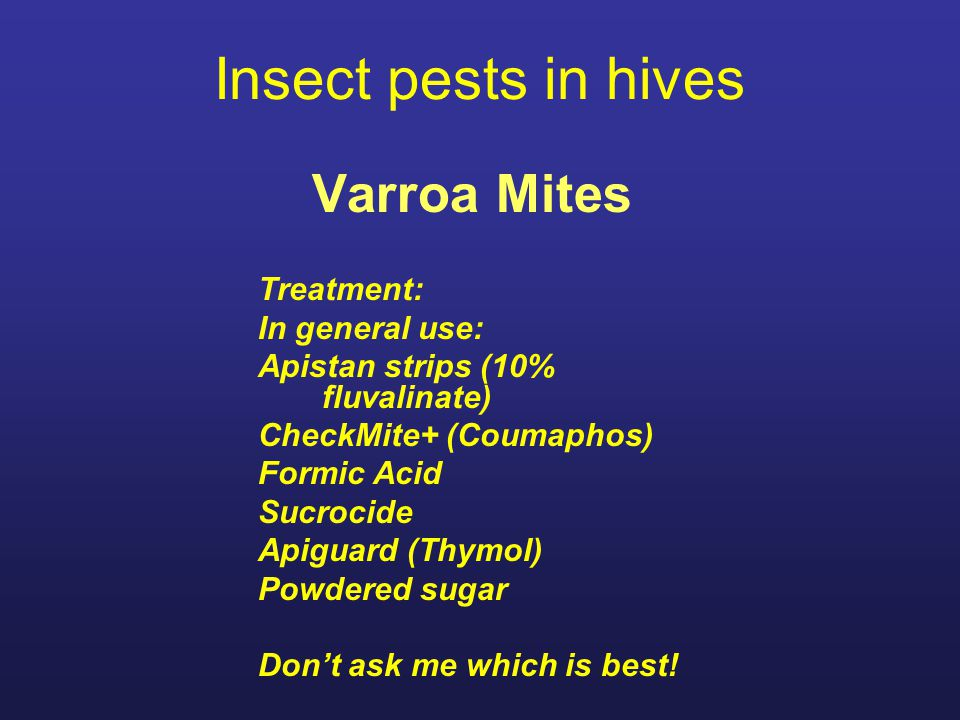 Insect pests in hives Varroa Mites Treatment: In general use: Apistan strips (10% fluvalinate) CheckMite+ (Coumaphos) Formic Acid Sucrocide Apiguard (