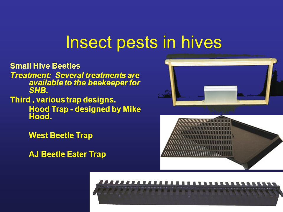 Insect pests in hives Small Hive Beetles Treatment: Several treatments are available to the beekeeper for SHB. Third, various trap designs. Hood Trap
