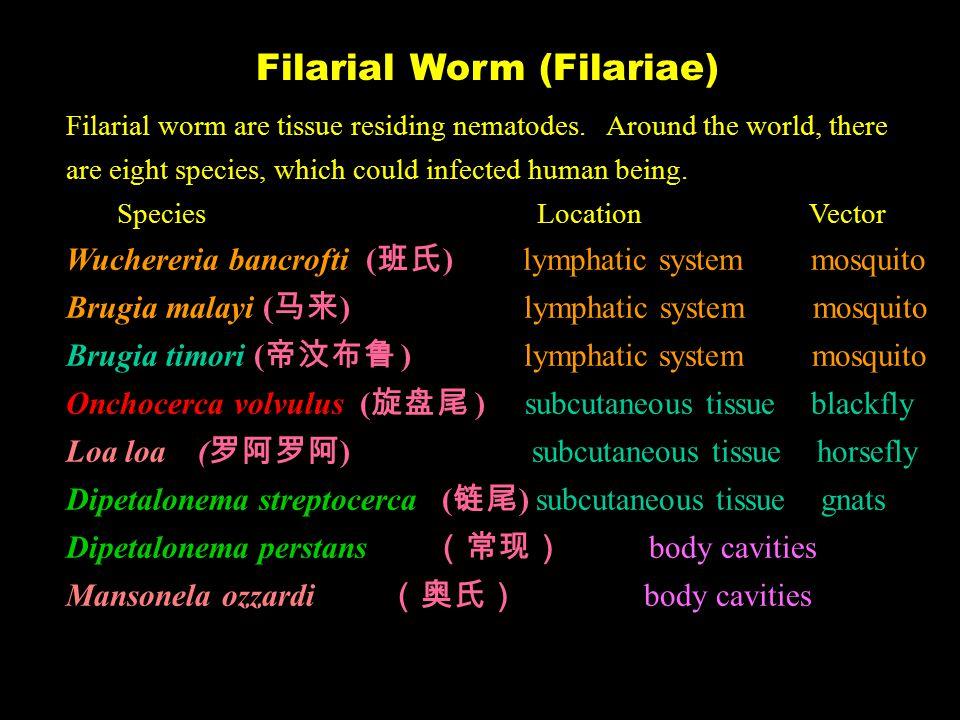 Filarial Worm (Filariae) Filarial worm are tissue residing nematodes.