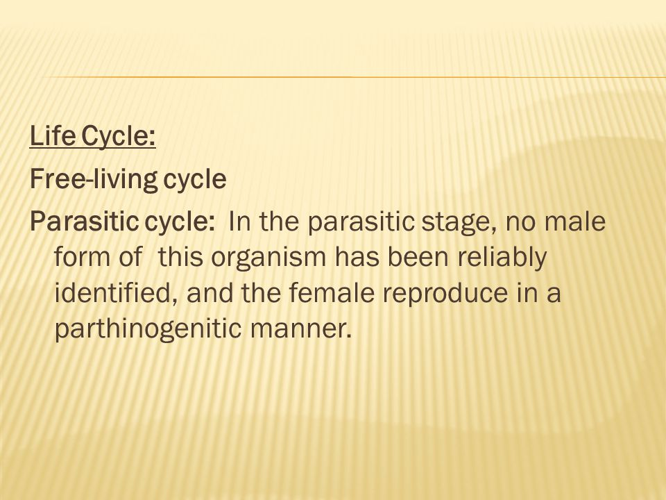 Life Cycle: Free-living cycle Parasitic cycle: In the parasitic stage, no male form of this organism has been reliably identified, and the female repr