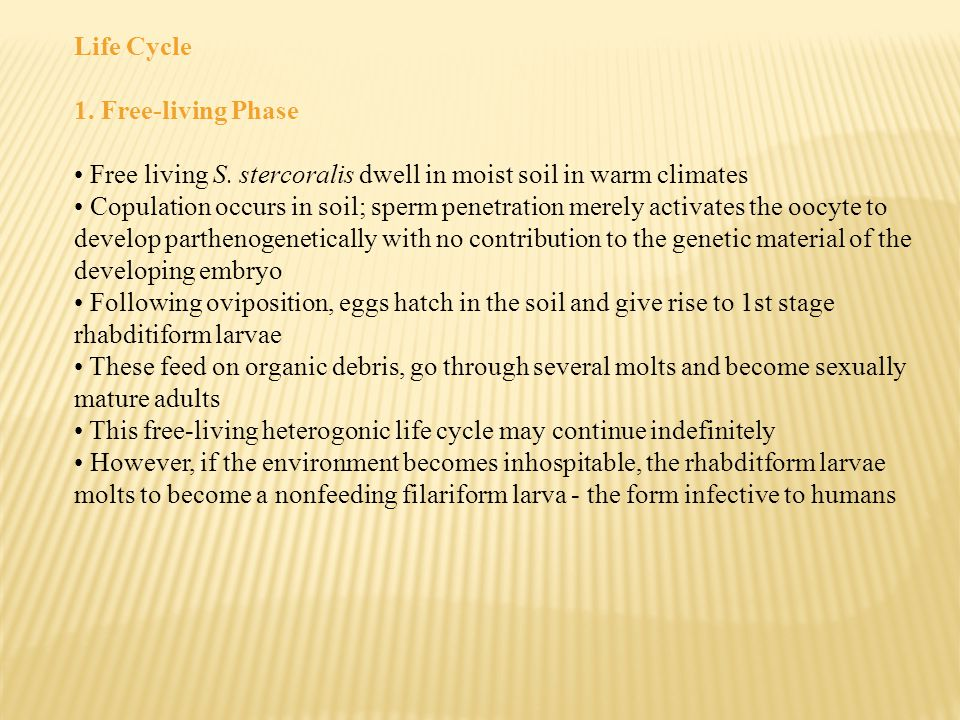 Life Cycle 1. Free-living Phase Free living S. stercoralis dwell in moist soil in warm climates Copulation occurs in soil; sperm penetration merely ac