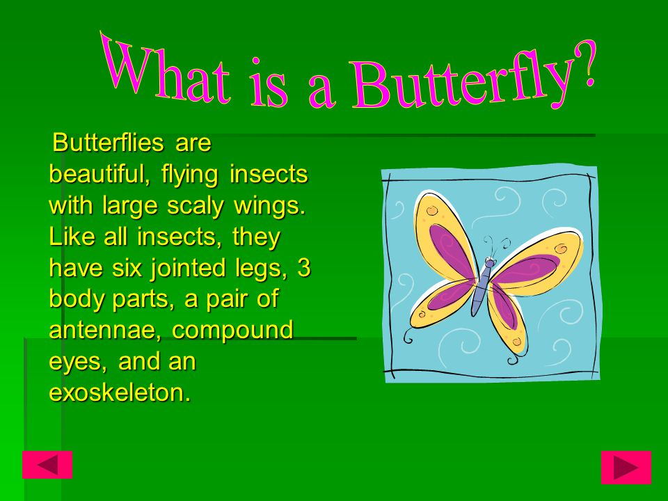 Table of Contents  What is a Butterfly.