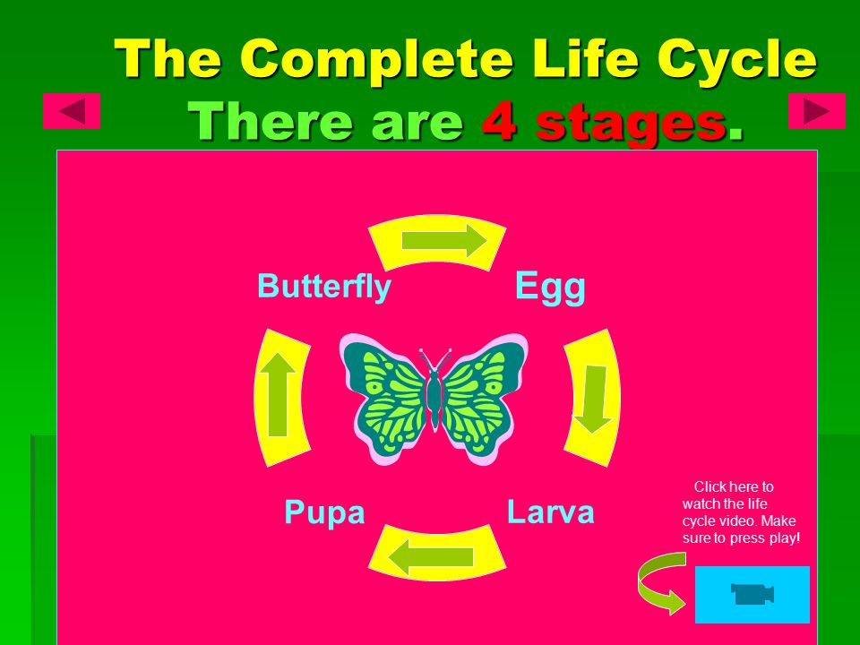 The Complete Life Cycle There are 4 stages.