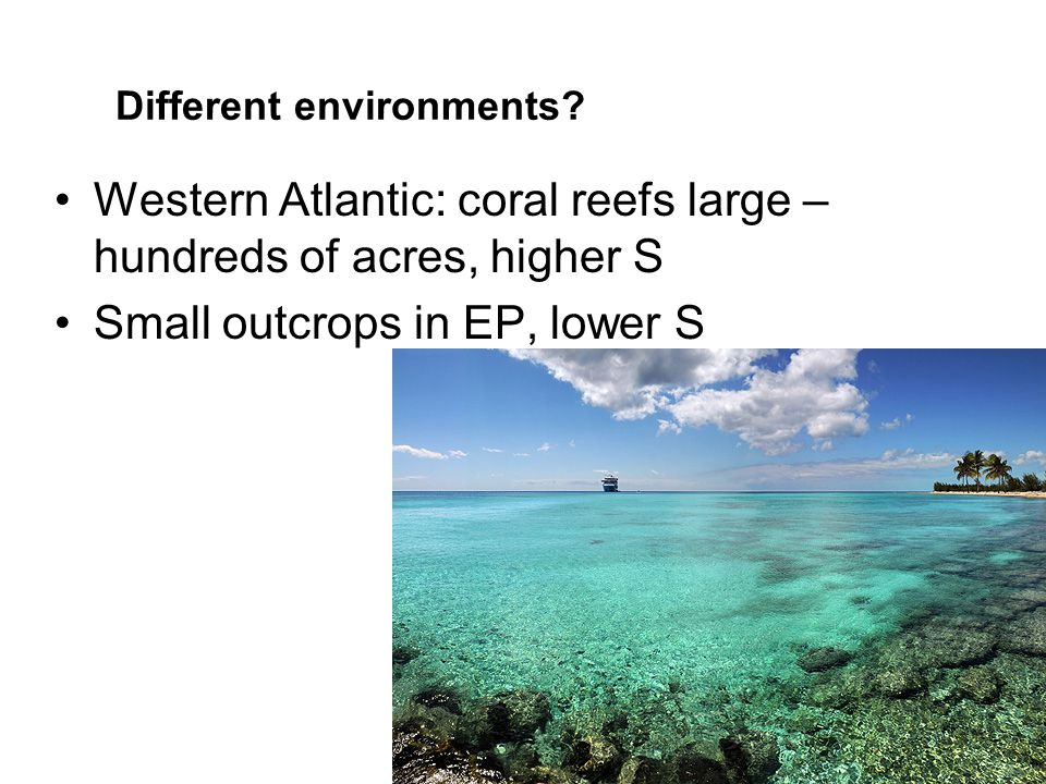 Different environments? Western Atlantic: coral reefs large – hundreds of acres, higher S Small outcrops in EP, lower S