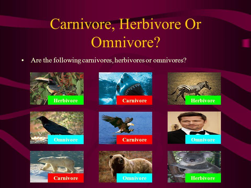 Carnivore, Herbivore Or Omnivore? Are the following carnivores, herbivores or omnivores?