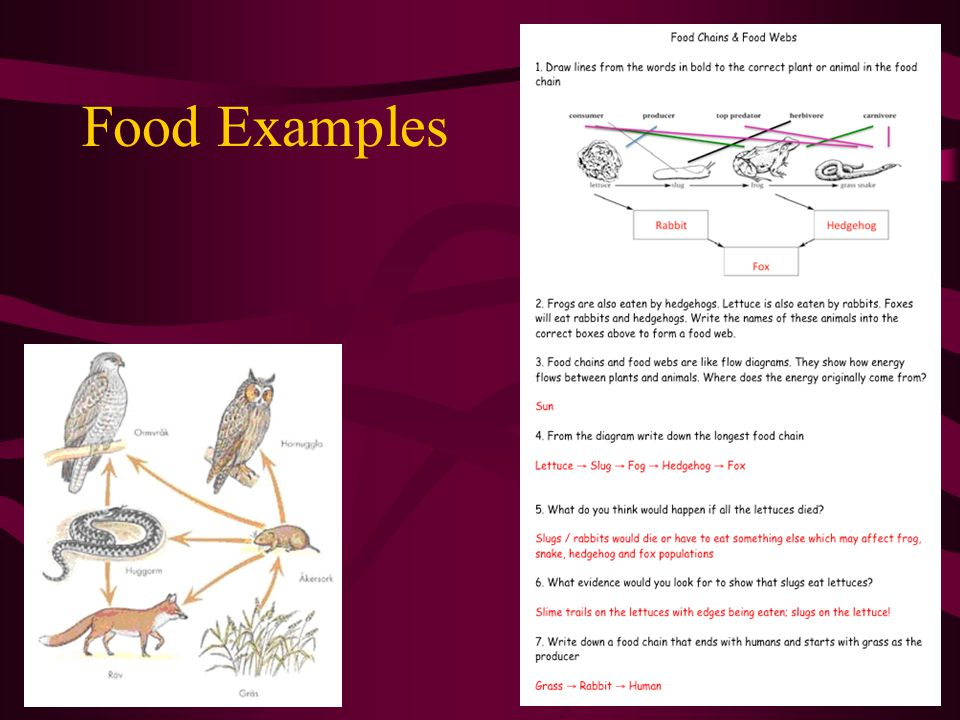 Food Examples Complete the food chains and food webs worksheet