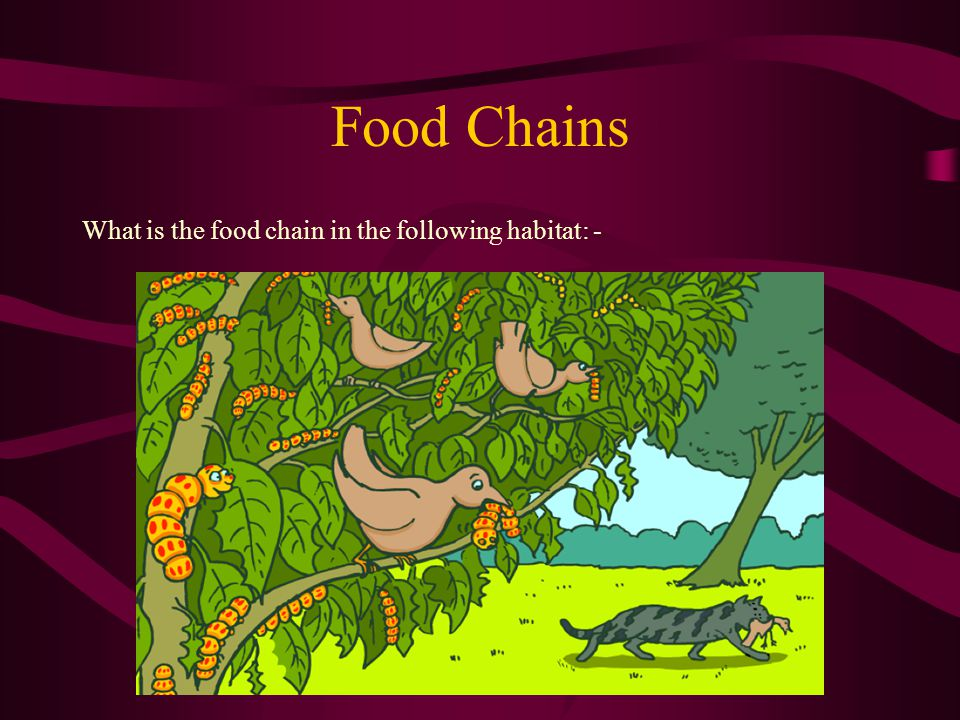 Food Chains What is a food chain.