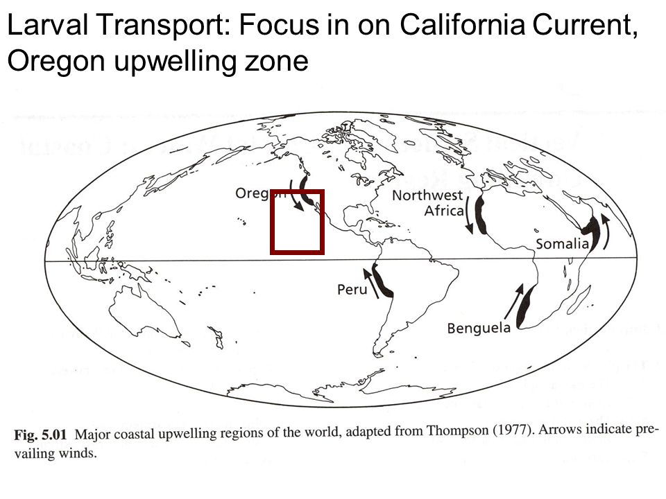 Larval Transport: Focus in on California Current, Oregon upwelling zone